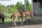 Horse Stock735
