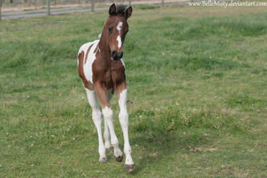 Horse Stock754 by BelleMisty