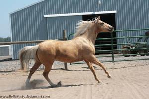 Horse Stock771 by BelleMisty