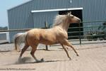 Horse Stock771