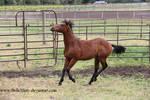 Horse Stock782
