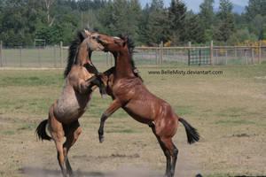 Horse Stock789 by BelleMisty
