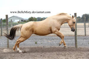 Horse Stock815 by BelleMisty