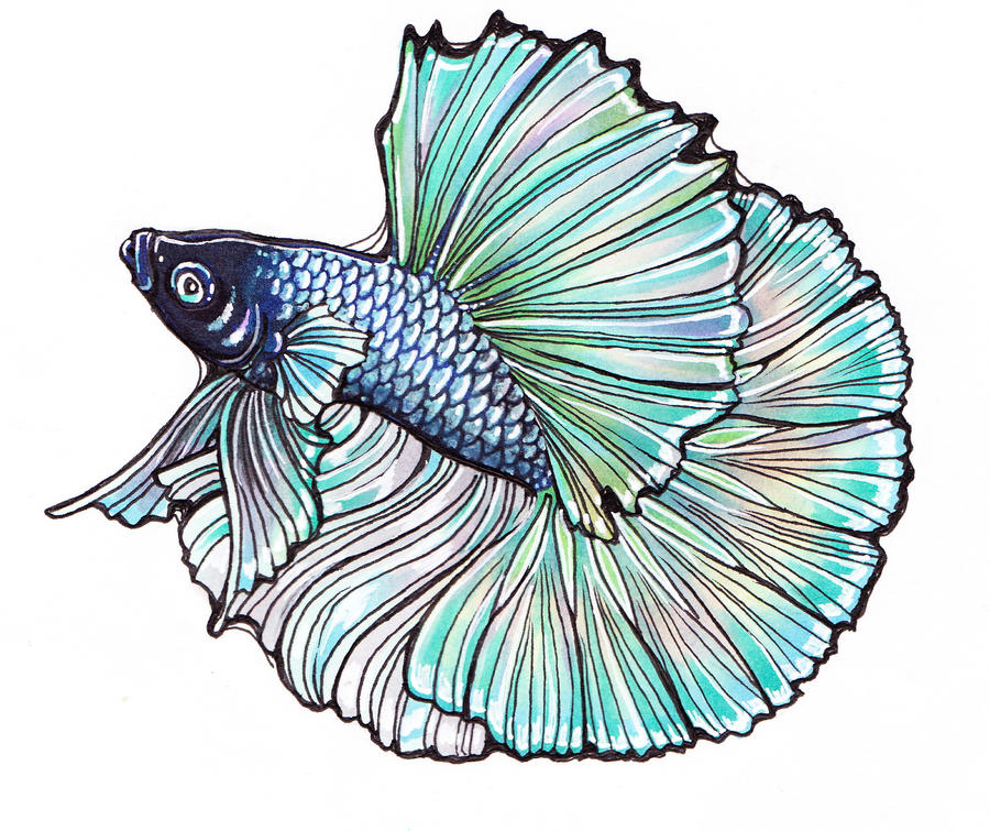 Betta Logo by Tsubane on DeviantArt Betta Fish Drawings