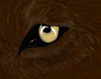 An eye by WarriorOfTheWolves
