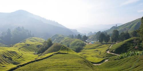 Cameron Highland tea plantation by SantiBilly