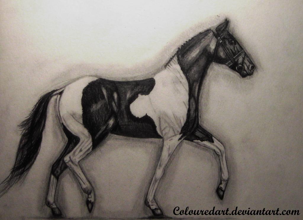 Trotting Paint Horse by ColouredArt