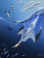 Northern gannet by Tifaeris
