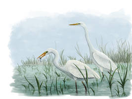 Great egret (Ardea alba) by Tifaeris