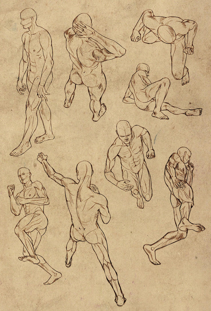 Hard perspective anatomy references for males by DocWendigo on ...