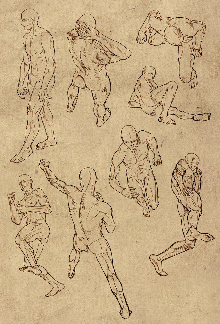 Hard perspective anatomy references for males by ElephantWendigo