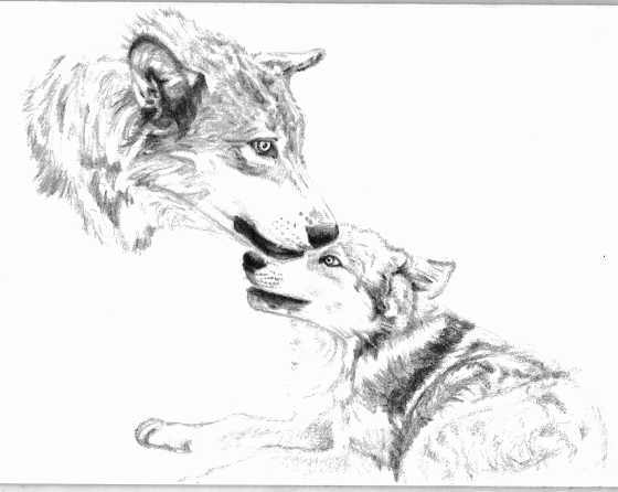 <img:http://fc06.deviantart.com/fs14/f/2007/080/d/d/Wolf_Adult_and_Pup_by_Lonemtnwolf.jpg>