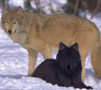 Wolf's Rain - Blue And Hige by AkatsukiAngelOfDeath