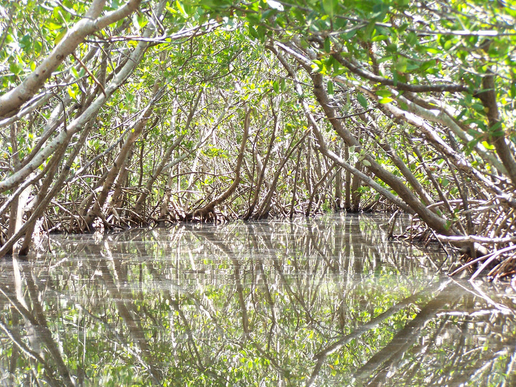 Mangrove Tunnels 3 by Polly-Stock