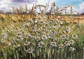 Wild Camomiles by Kasia1989