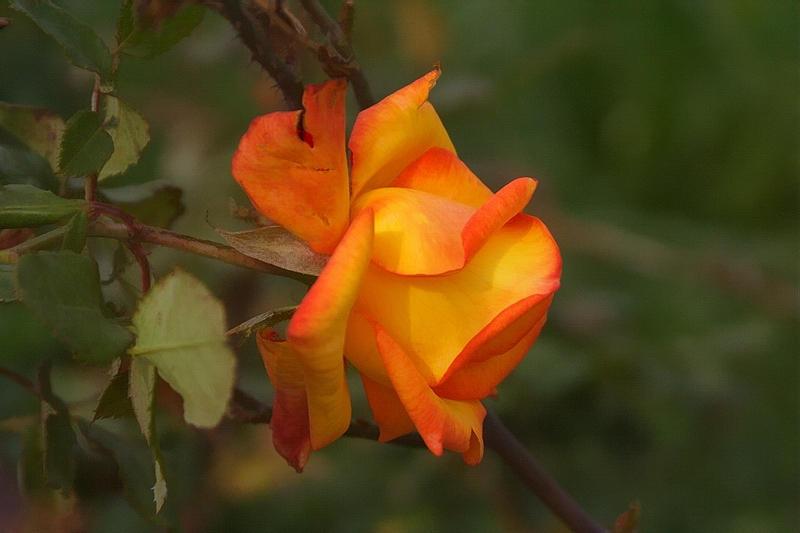 IMAGE: http://fc01.deviantart.com/fs11/i/2006/226/8/6/Flower3_by_Hamrani.jpg