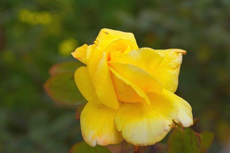 IMAGE: http://ic1.deviantart.com/fs11/i/2006/226/7/4/Flower5_by_Hamrani.jpg