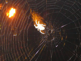 Spider Web Silhouette 2 by Riverd-Stock