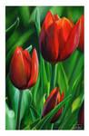 Tulips by rustydoubleohseven
