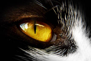 Eye of a Cat by IwasAcat