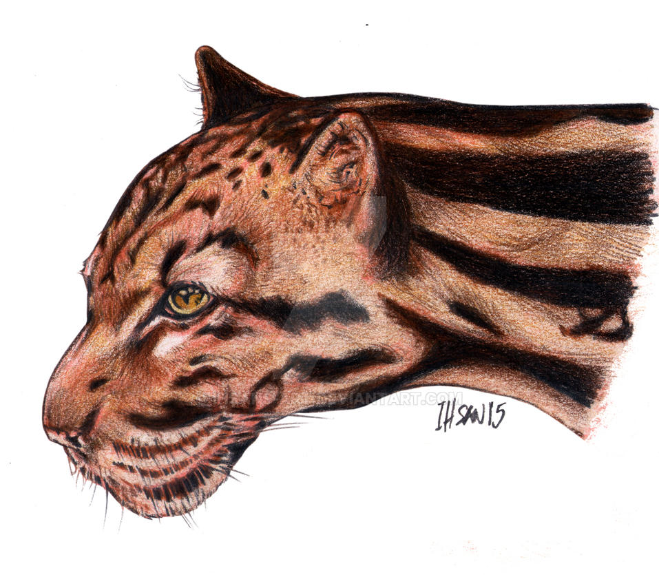 Harimau/Tiger