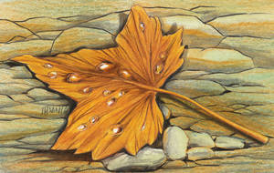 Leaf and Life