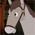 Fred the horse icon