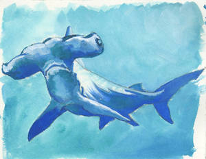 hammerhead shark from photo reference