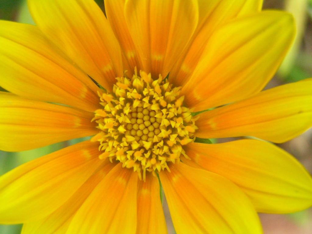 happy flower xD