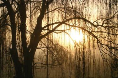 Farm Fog Dawn