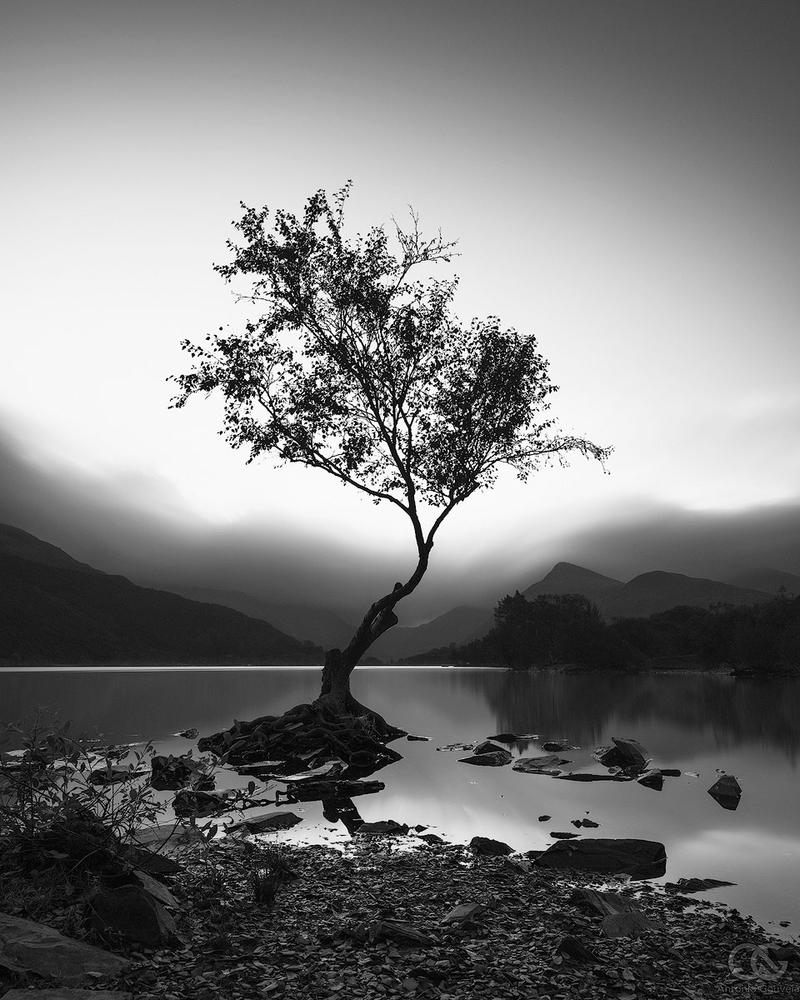 Lone Tree by AntonioGouveia