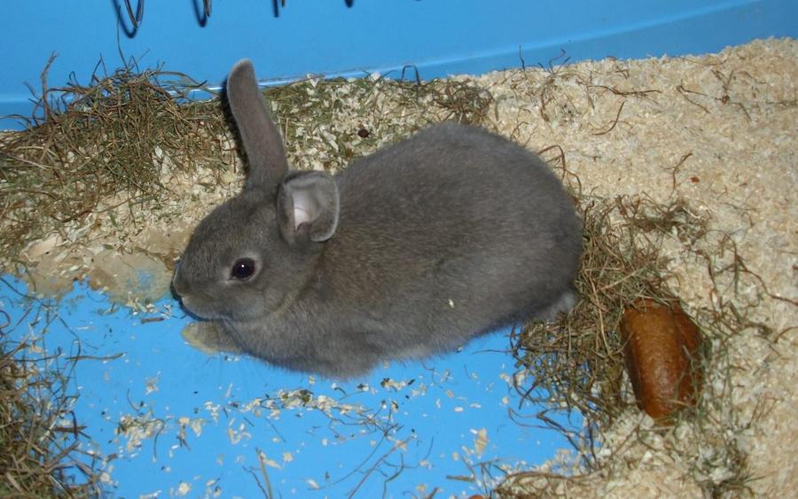 My pet rabbit 3 by SchnuffelKuschel