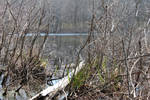 Pond Meadow Park VI by cleanshvr