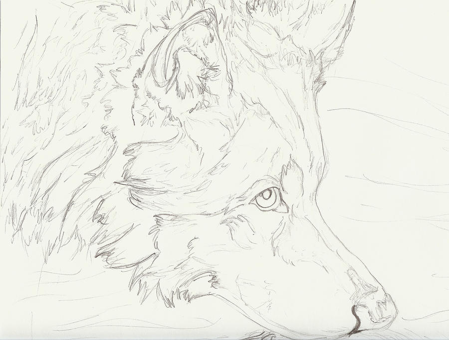Wolf Swifty Face by wolfworld on DeviantArt