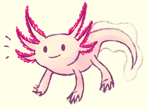 How to Draw an Axolotl - Wedrawanimals