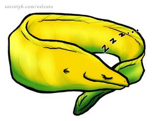 Sleepy Moray Eel, Yellow