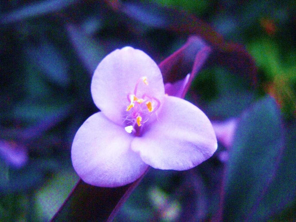 Violet Blossom by LittleSaberus