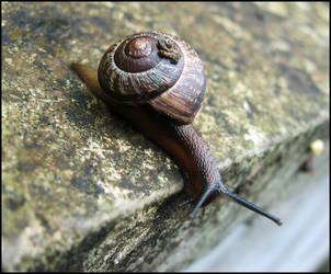 snail by 0ksana