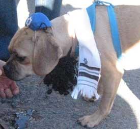 The Jew-ish Dog