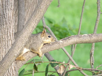 Out on a limb