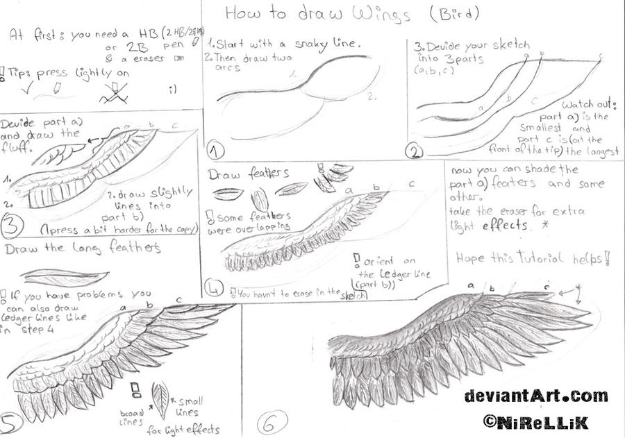 Magnificent Bird Wings Anatomy Photos - Human Anatomy Images ...