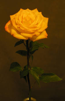 Gold roses 06