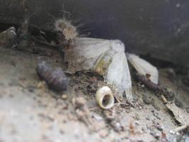Smeeshy Bugs 3