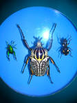 Goliath, Emerald, and Spotted Beetles