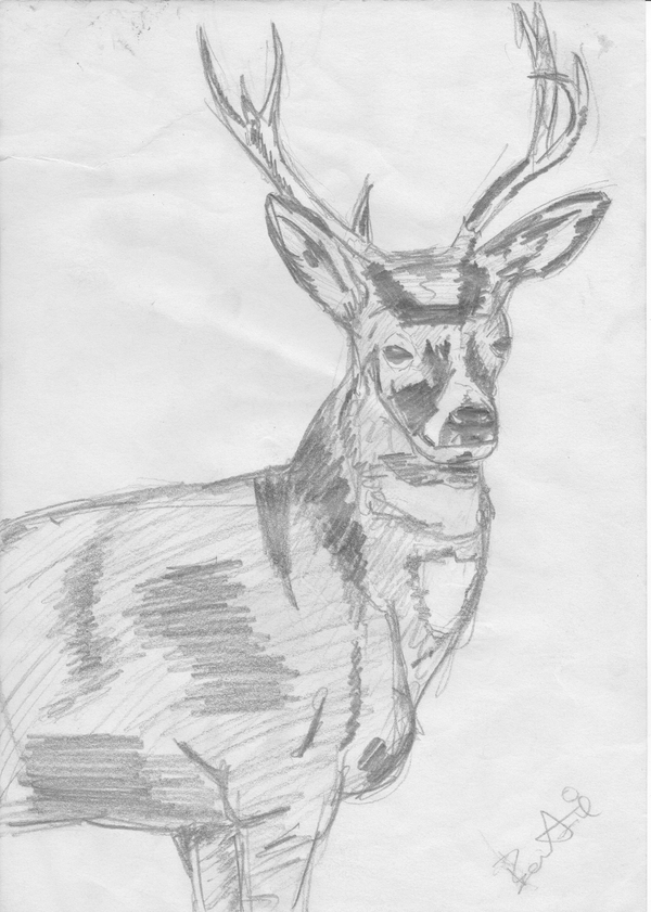 some old sketche's Stag_by_Bestie71