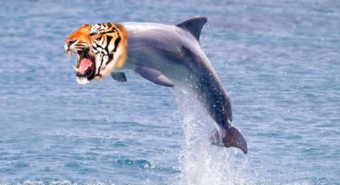 tiger dolphin