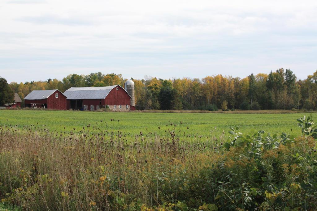 Farm and Field by shatterbreak