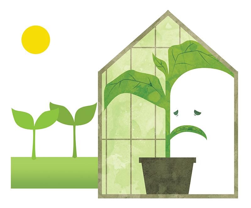 Greenhouse plant by MilouvanMontfort