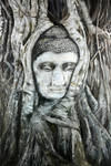 Buddha Head in a Tree Trunks
