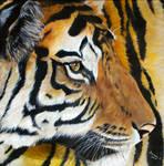 Eye of a Tiger